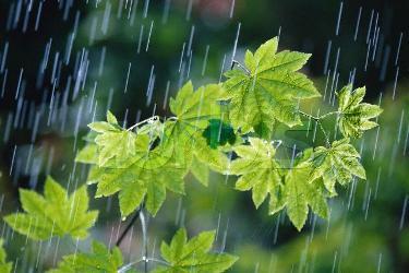 بارش باران در پاوه به بیش از 1200 میلیمتر رسید