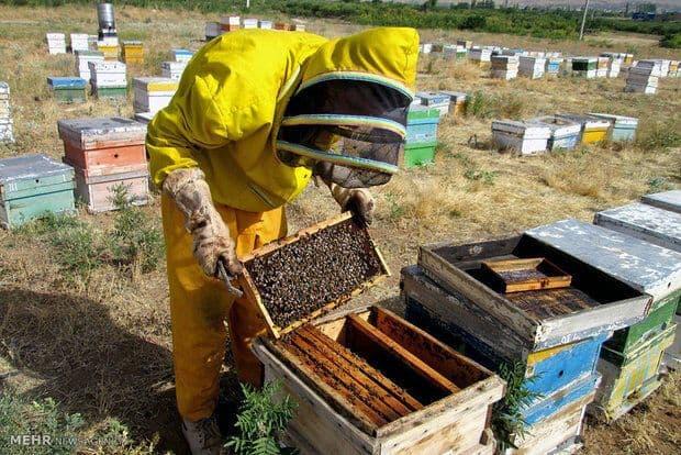 کارآفرینی در راستای اقتصاد مقاومتی/ تحقق اقتصاد مقاومتی با زنبورداری در پاوه