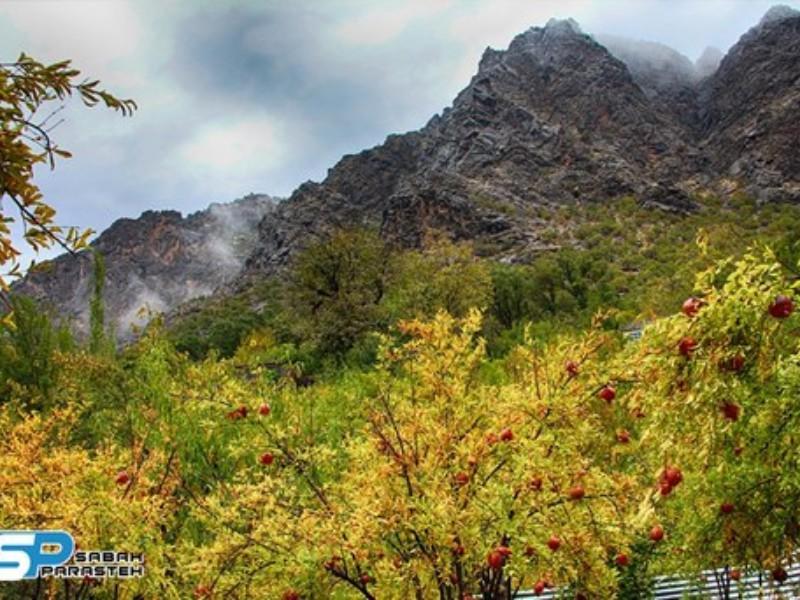 داریان؛ روستایی صادرکننده در دل کوههای پاوه